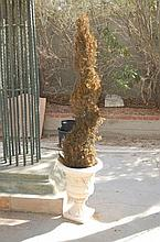 Planter With Tree