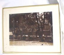 Vintage Photograph of Camels & Tribesman Resting Under the Shade 25x21