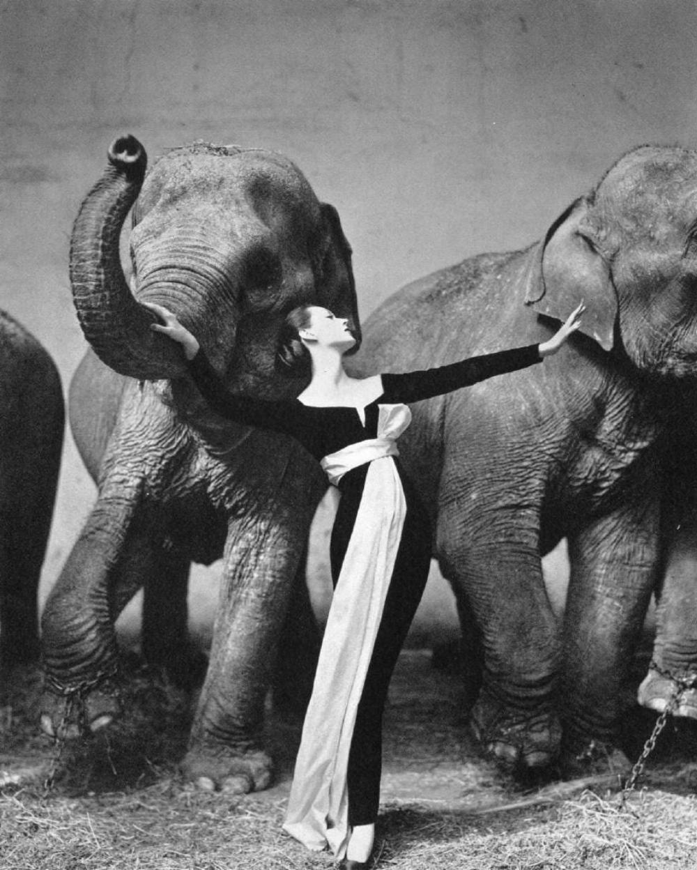 RICHARD AVEDON - DOVIMA WITH ELEPHANTS, 1955