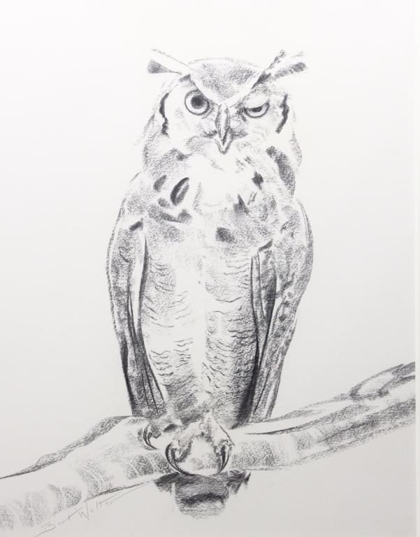 Bart Walter Original Charcoal Horned Owl I