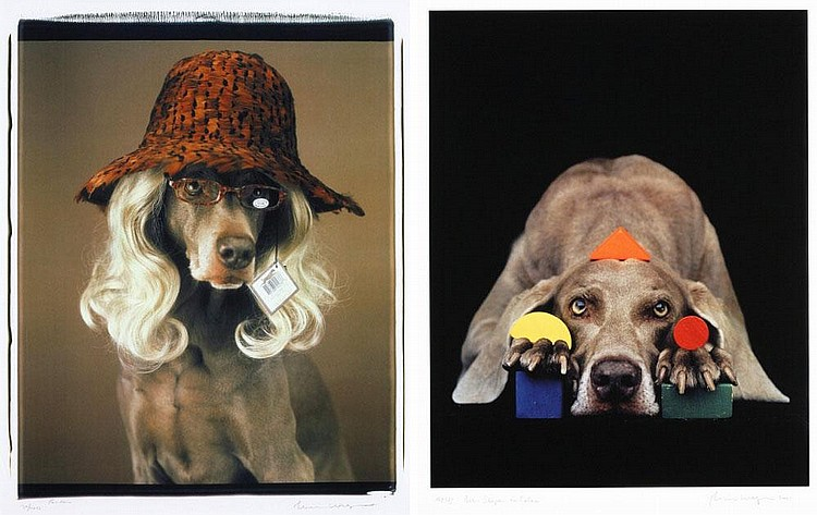 William Wegman, Reader/Basic Shapes in Color (set