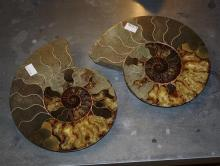 A pair of polished Ammonite fossil specimens geological interest, Mollusca Cephalopoda Ammonoidea, 60-420 million years old,