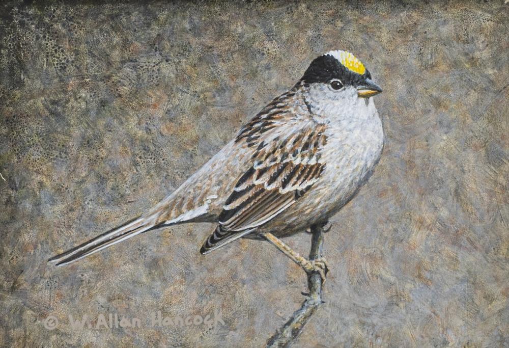 W. Allan Hancock, Canadian (20th c.), Golden - Crowned Sparrow 2, acrylic on board, 5 x 7 in. (12.7 x 17.7 cm)