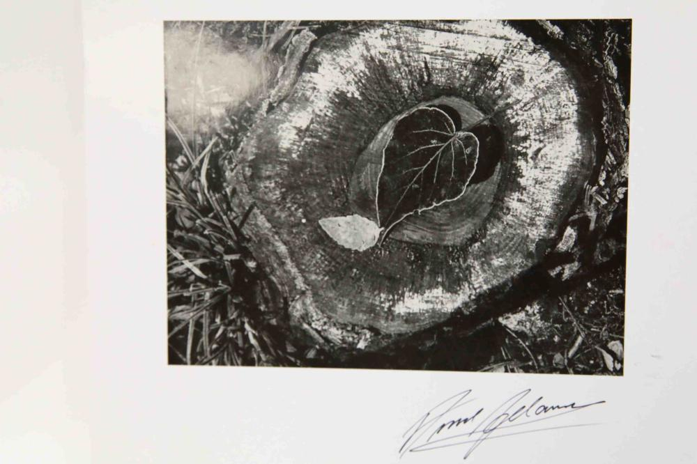 "Ansel Adams hand signed Print ""Stump & Leaf"""