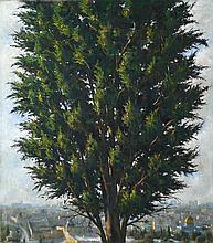Cypress In Jerusalem, 2008