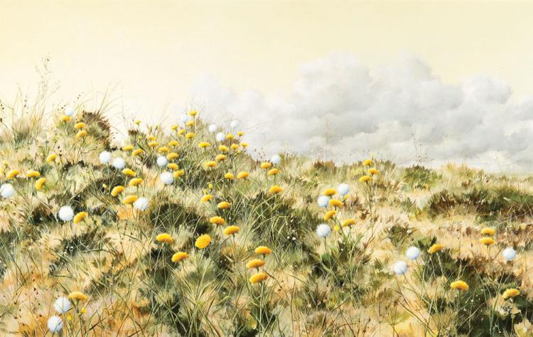 Donald McAdoo - Field of Flowers