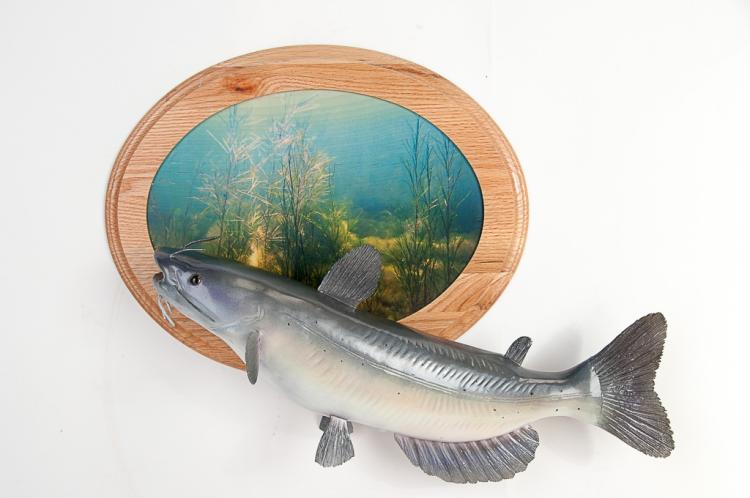 Catfish on Plaque Reproduction