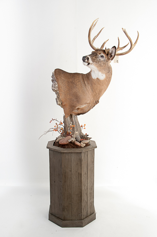 11pt. Whitetail Buck on Large Pedestal