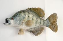 White Crappie Wall Mount