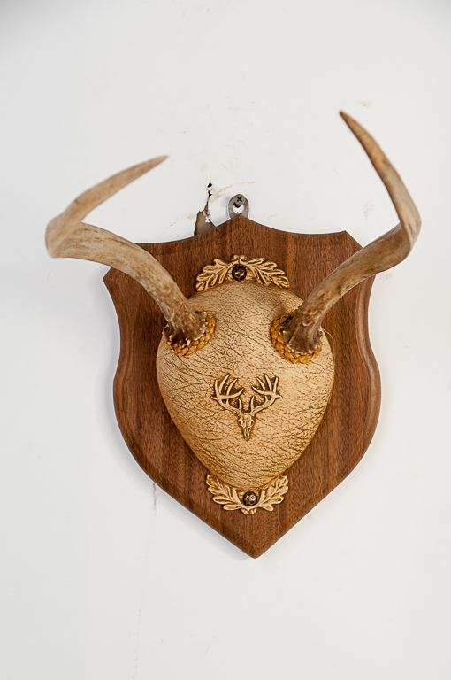 Spike Antlers Whitetail Deer Hanging Mount