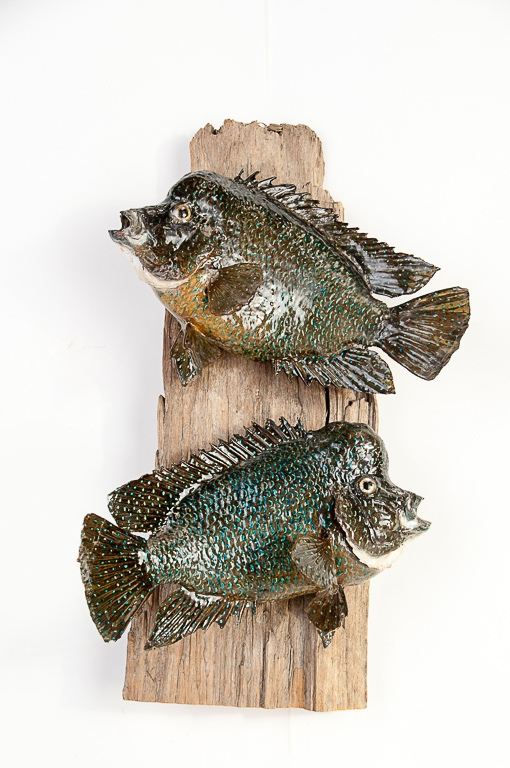 Two Rio Grande Perch from Mexico Lake Guerrero