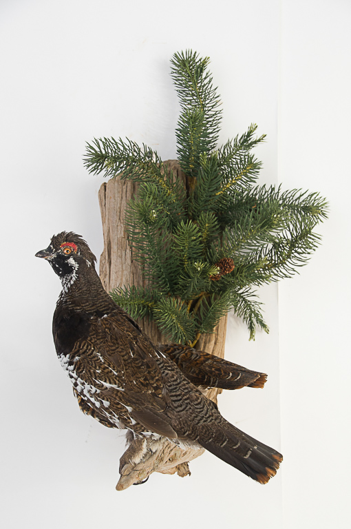 Spruce Grouse Wall Mount