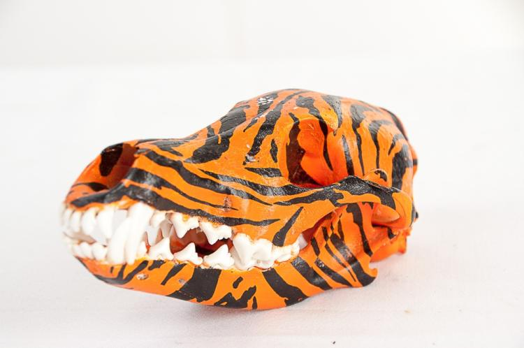 Coyote Dipped Bengal Tiger Skull