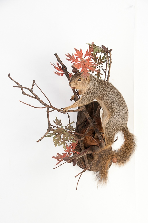 Fox Squirrel Wall Mount