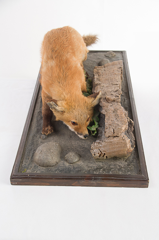 Red Fox Full Mount