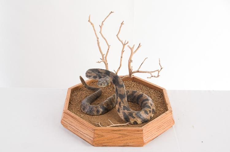 Rattlesnake Table Mount