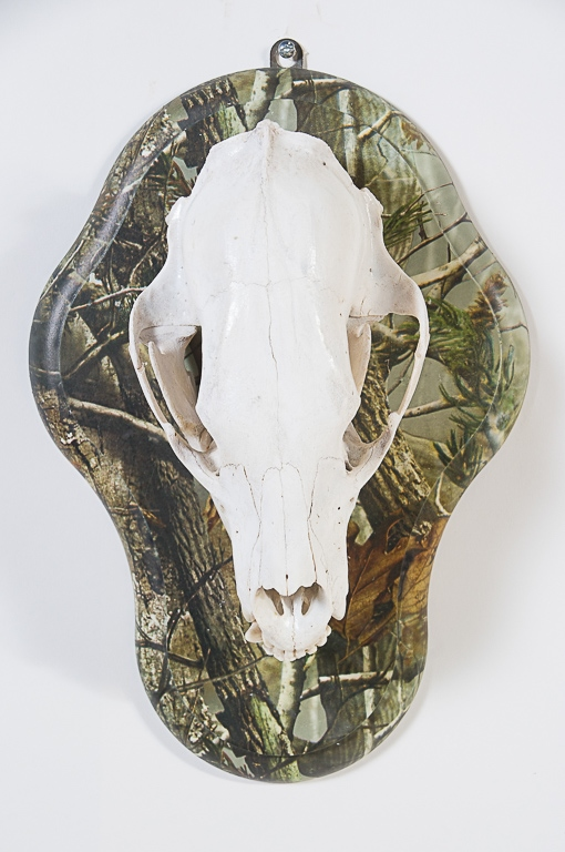 Black Bear Skull on Camo Plaque