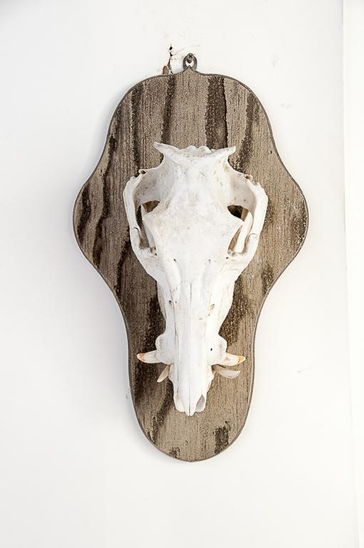 Boar Skull on Plaque