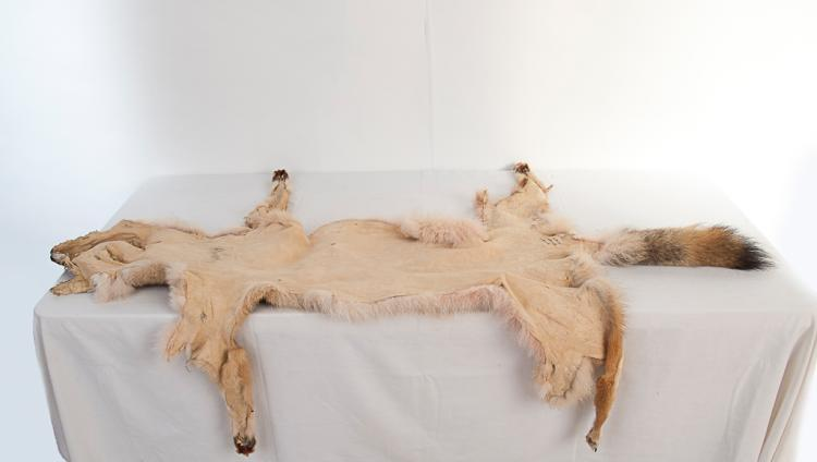 Large Coyote Skin