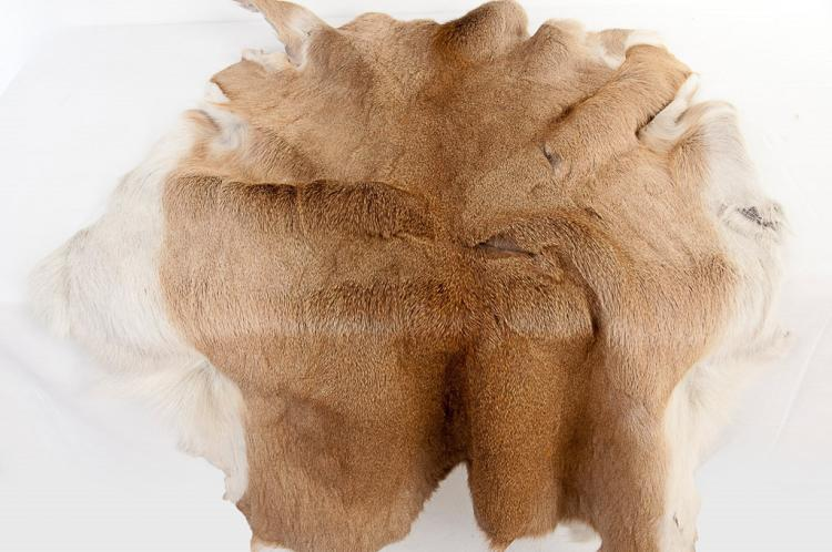 Whitetail Buck Tanned Hide