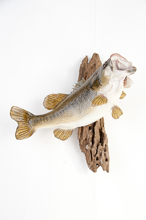 Largemouth Bass Wall Mount