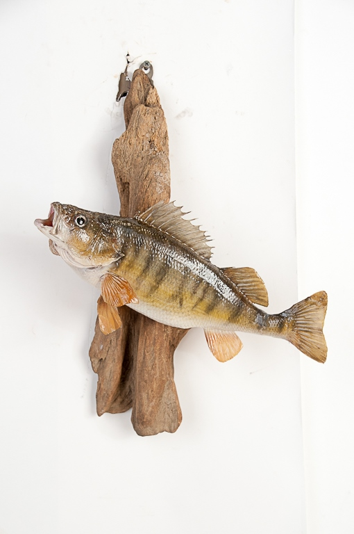 Perch Wall Mount