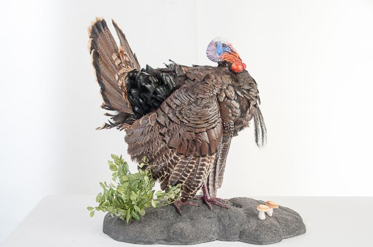 Wild Turkey Full Mount