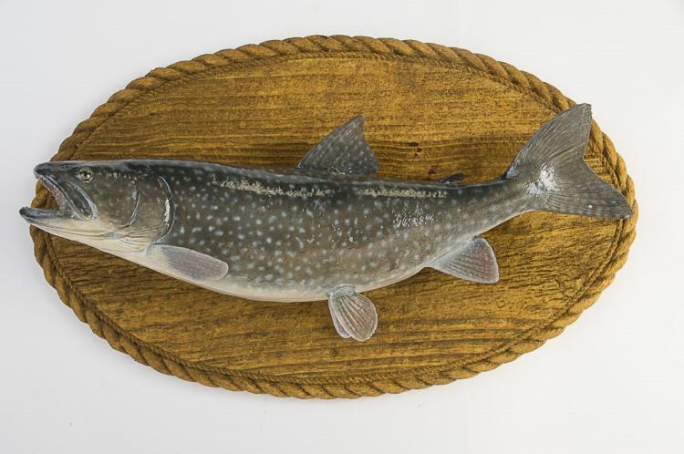 Lake Trout Wall Mount
