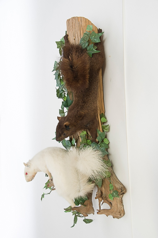 White & Black Squirrels Wall Mount