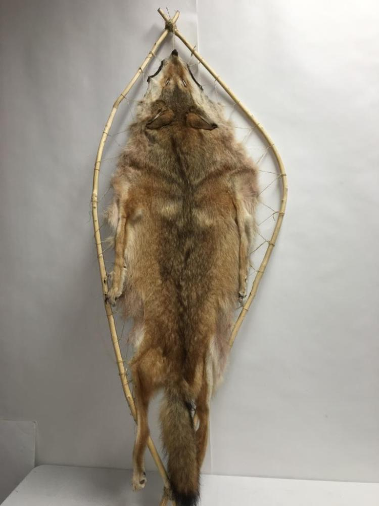 Coyote Hide Stretcher