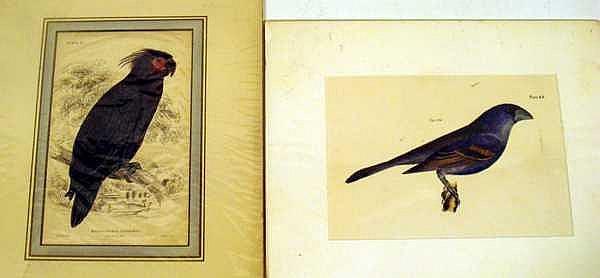 Lot 3026: Original Hand-Tinted ANTIQUE ORNITHOLOGICAL PLATES Chromolithographs Owl Hawk Birds OF Prey Water Fowl Penguins Hummingbirds Parrots Tropical