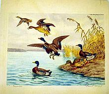 Lot 3093: Signed Numbered VINTAGE/ANTIQUE ORIGINAL ETCHINGS & PRINTS Hand-Tinted Bennett Sommer Hinson Wood Weber Oriental Ornithological Floral Court