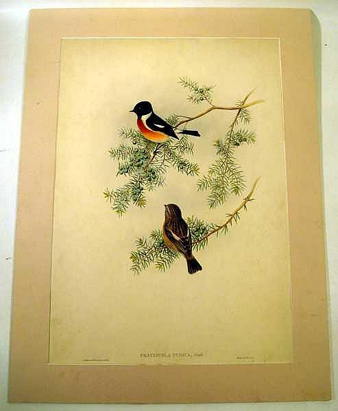 John Gould / H C Richter ORIGINAL HAND-COLORED ORNITHOLOGICAL LITHOGRAPH c1865 Antique Natural History Indian Furze-Chat