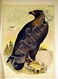 Jacob H. Studer STUDER'S POPULAR ORNITHOLOGY: THE BIRDS OF NORTH AMERICA 1881 Theodore Jasper Chromolithograph Plates