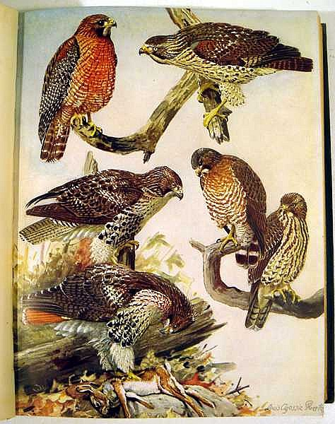 4v Color Plates Antique Ornithology New York State Massachusetts New England Forbush Birds