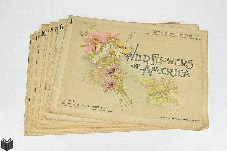 12Pcs G H Buek & Co THE WILD FLOWERS OF AMERICA 1894 Botanical Fine Art Weekly Antique Periodical Botany Wildflowers Native Plants Ginseng Poppy Orchis Thistle Color Prints Illustrations