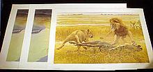 3 Pc. Like New BIG CATS FINE ART PRINTS Limited Edition Lithographs Nature Safari Game Prints Robert Bateman Lions Africa Siberian Tiger