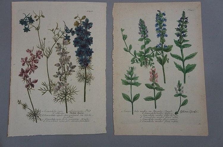 Two 18th Century hand coloured botanical plates,