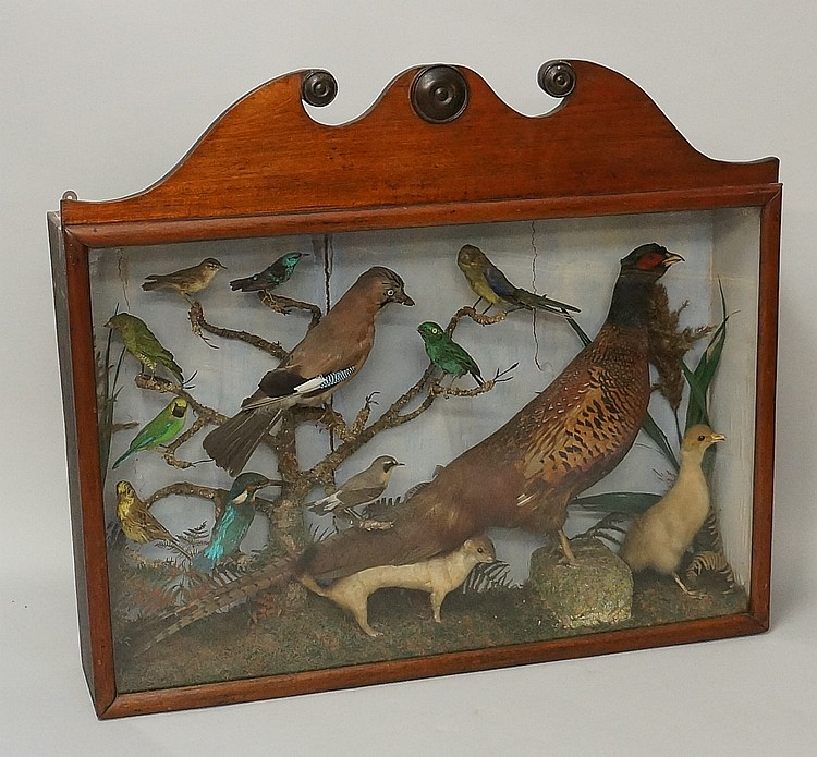 Taxidermy - a 19th Century French tableau including pheasant, Jay, Kingfish