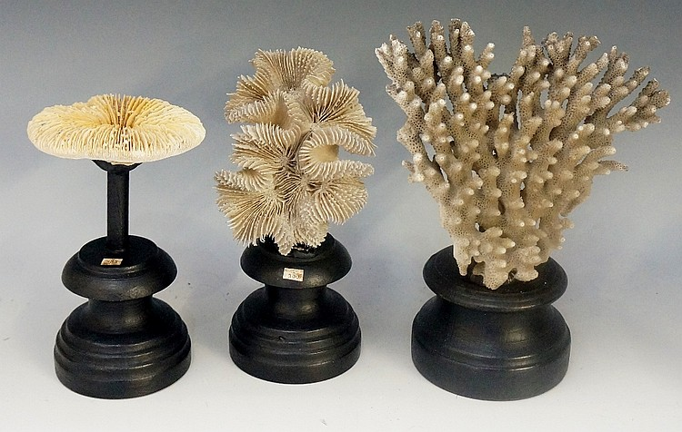 Three pieces of coral mounted on ebonised pedestals, 20cm high and smaller