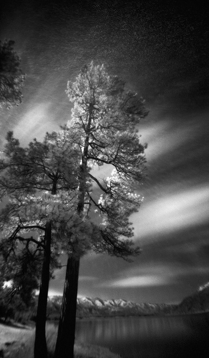 Trees, Vallecito Lake - Large-Scale, Limited Edition Photography