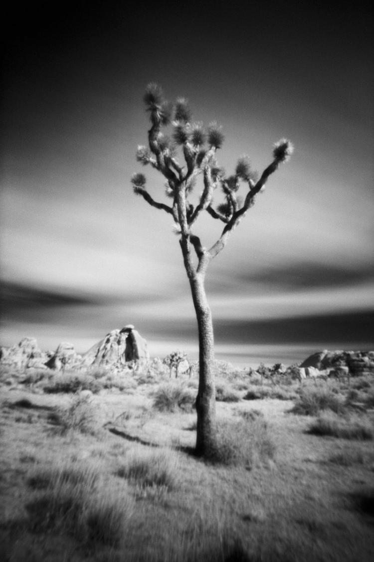 Joshua Tree National Park - Large-Scale, Limited Edition Photography