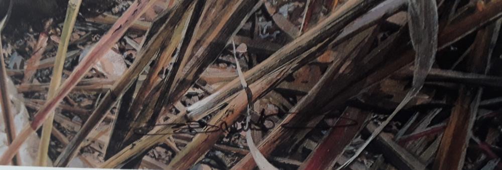 "Carl Brenders' ""Tall Grass Tiger""Limited Edition Print"