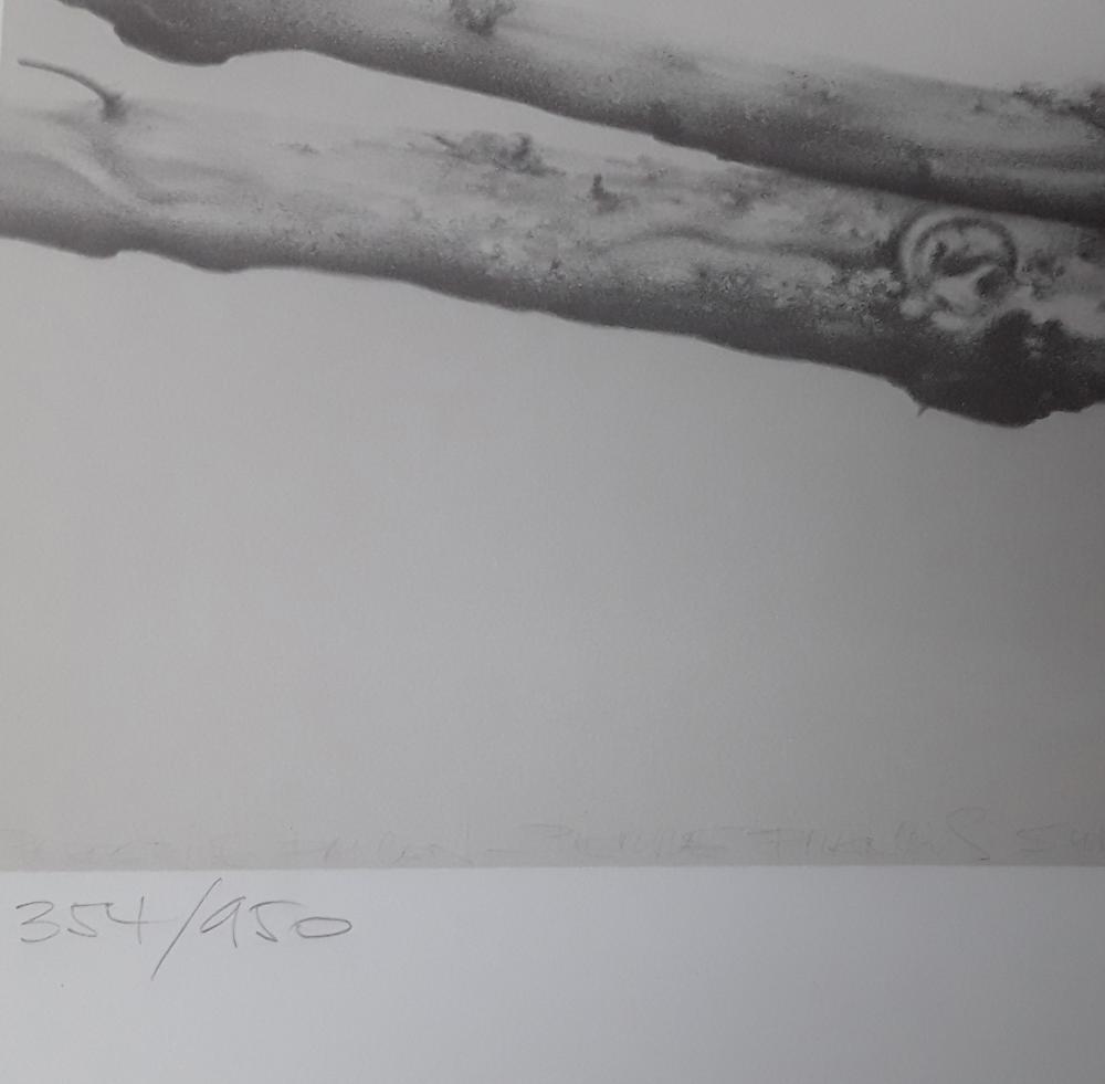 "Pierre Francis Surtes' ""Peregrine Falcon"" Limited Edition Print"