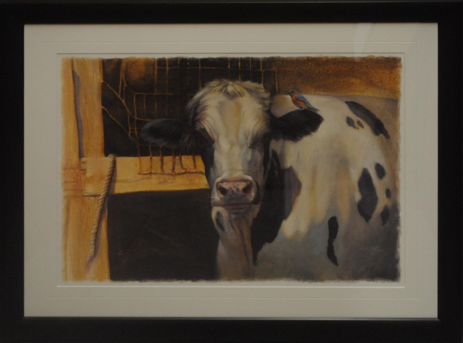 Framed Picture of a Cow