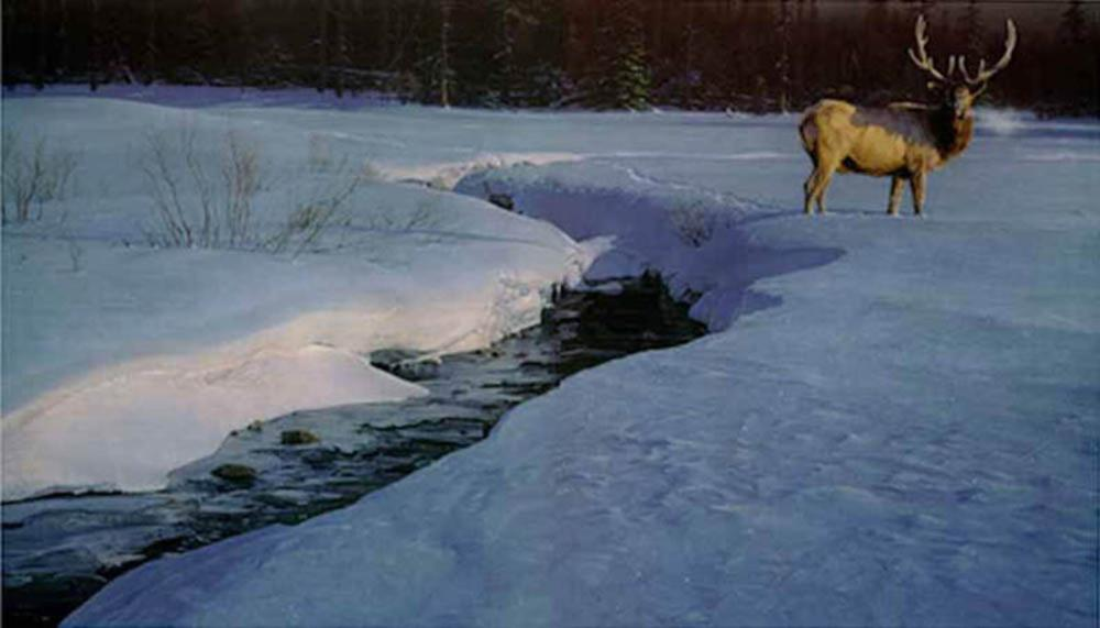 "Daniel Smith's ""Solitary Tracks"" Artist Proof Print"