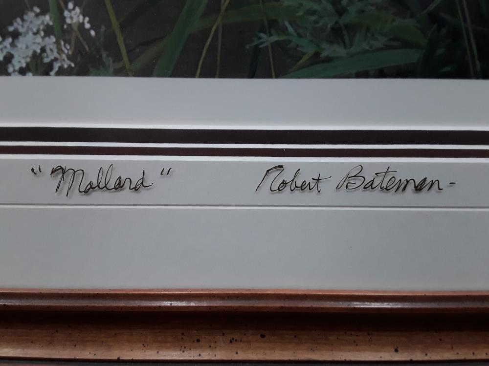 "Robert Bateman's ""Meadows Edge- Mallard"" Limited Edition Framed Print"