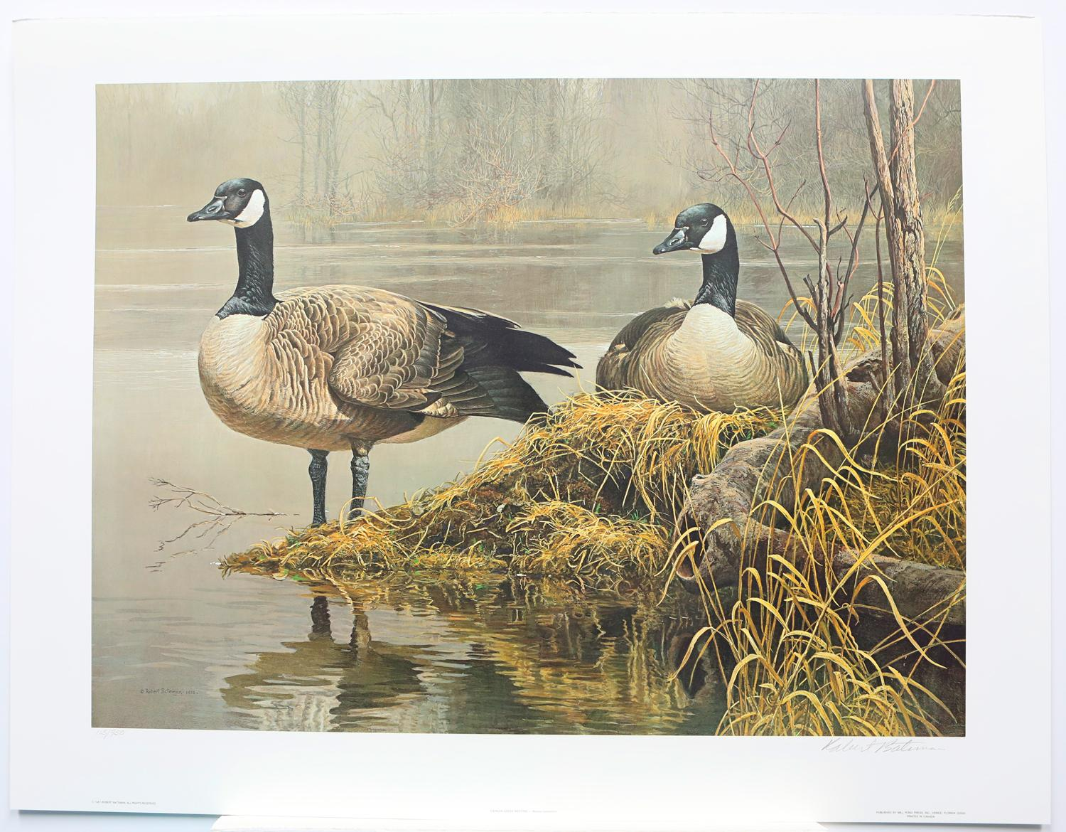 """Robert Bateman's """"Canada Geese - Nesting"""" Limited Edition Print Signed and Numbered"""