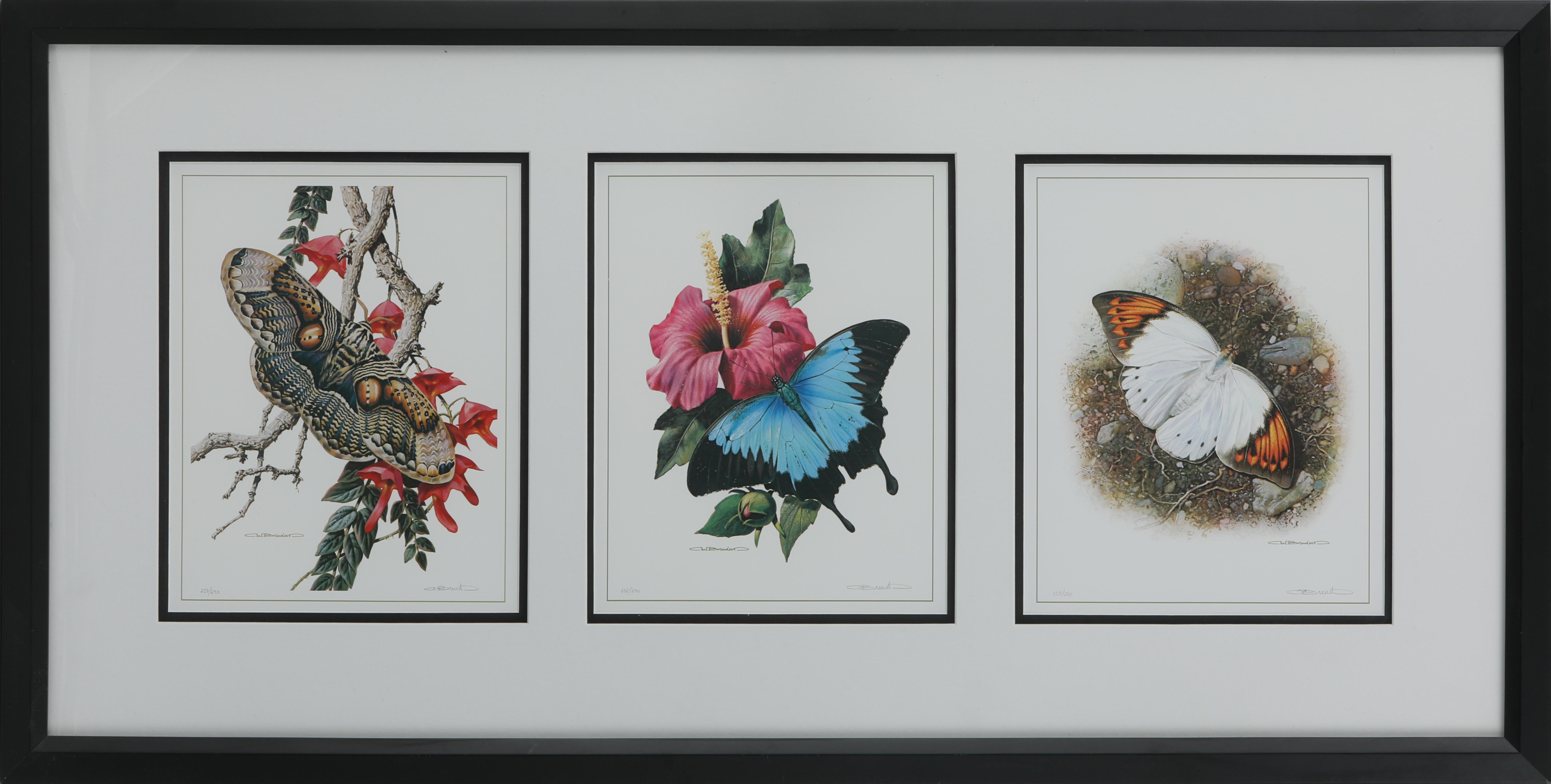 "Carl Brenders' ""Butterflies"" Framed Set of 3 Limited Edition Prints"