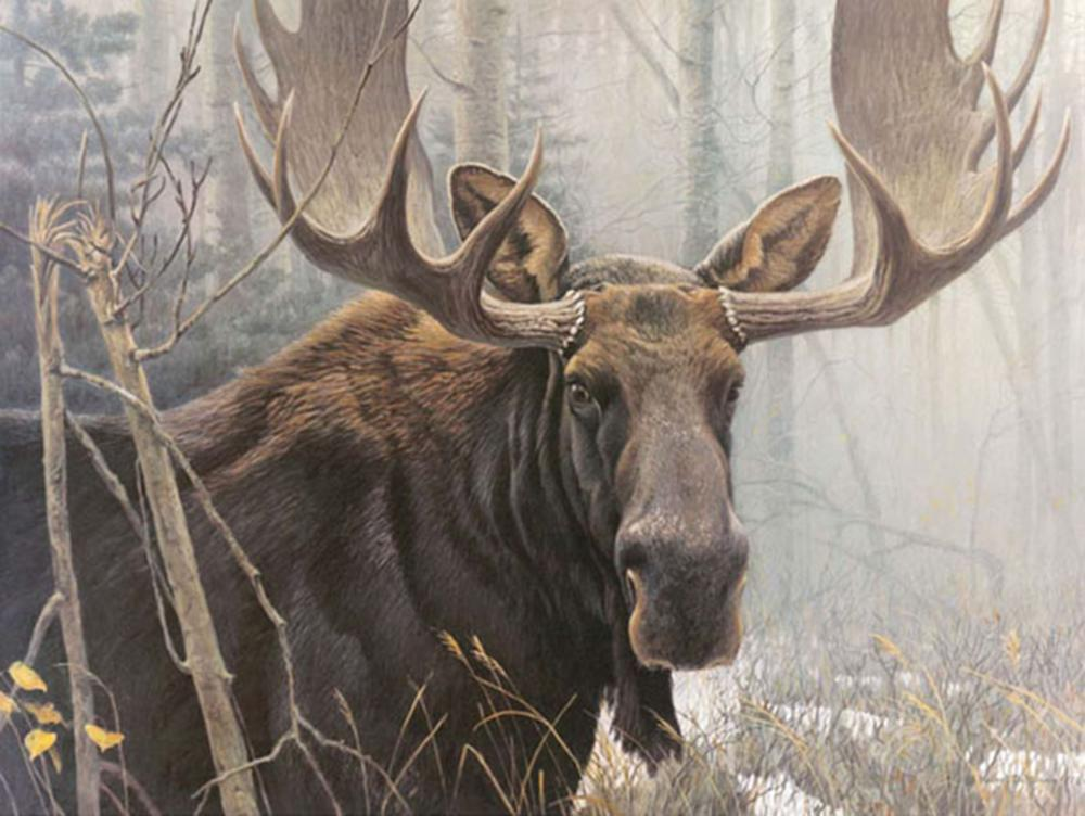 "Robert Bateman's ""Bull Moose - Renaissance Edition"" Limited Edition Canvas Signed And Numbered"
